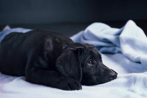 puppy anxiety